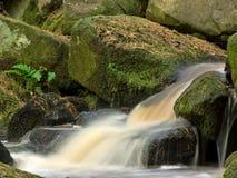 поток папоротника осени одиночный Стоковая Фотография