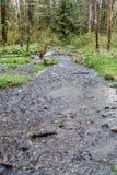 Поток 2 парка стоковое фото rf