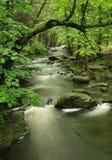 поток Пенсильвании пущи Стоковые Фото