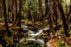 Поток печи для обжига с Redwoods стоковые изображения