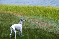 поток поля собаки Стоковое фото RF