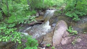 Поток пропуская в лесе среди камней сток-видео