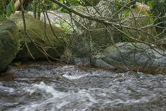поток пущи малый стоковая фотография rf