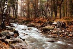 поток пущи осени Стоковые Изображения