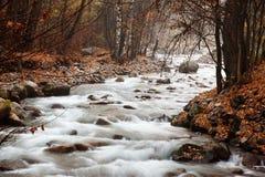 поток пущи осени Стоковые Фотографии RF