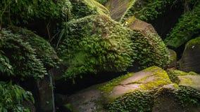 поток пущи тропический Стоковая Фотография