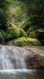 поток пущи тропический Стоковое Изображение