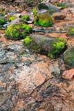 поток пущи Стоковые Фотографии RF