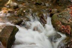 Поток пущи Стоковые Фото