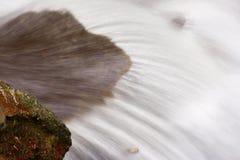 Поток пущи Стоковые Изображения RF