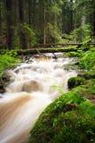 поток пущи Стоковая Фотография