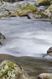 Поток пущи Стоковое Изображение