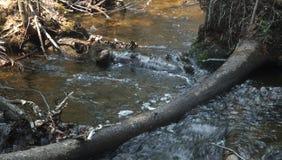 Поток пущи Стоковое Фото