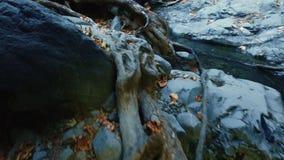 Поток реки бежать над корнями и утесами дерева Чисто водопад свежей воды видеоматериал