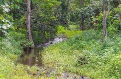 Поток реки леса стоковая фотография