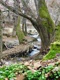 Поток реки стоковые изображения