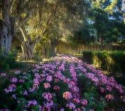 Поток розовых цветков Стоковая Фотография