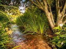 Поток сада Стоковые Фото
