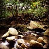 Поток свежей воды Мауи Стоковая Фотография