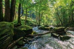 Поток среди утесов в глубоком лесе стоковые изображения
