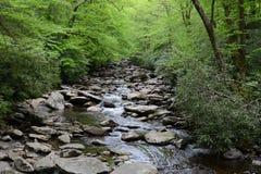 Поток Теннесси в древесинах Стоковые Фотографии RF
