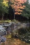 поток тиши падения цветов Стоковые Фото