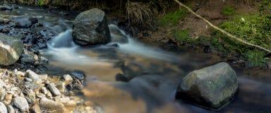 Поток тропического леса стоковые фотографии rf