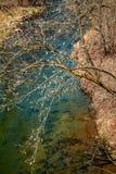 Поток форели ` s Главера в парке долины отголоска стоковые фото