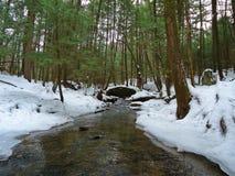 Поток форели зимы Стоковая Фотография RF