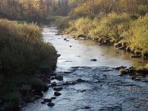 Поток форели Стоковая Фотография RF
