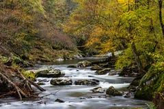 Поток через ландшафт падения на пике листвы Стоковая Фотография