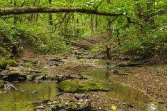 Поток через древесины стоковое фото
