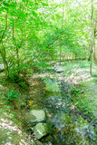 Поток через сочный зеленый лес Стоковые Фотографии RF