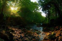 поток Стоковые Фото