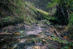 Поток Стоковое Фото