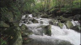 Поток Balian в Тайване сток-видео