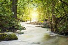 Поток Forrest Стоковая Фотография RF