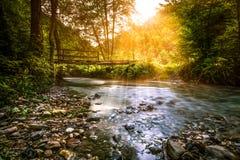 Поток Forrest Стоковые Фотографии RF