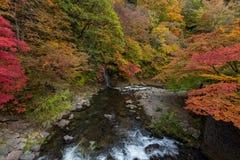 Поток Fudo в сезоне осени на горе momiji Nakano Стоковое Изображение RF
