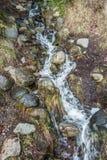 Поток 4 Lincoln Park стоковая фотография