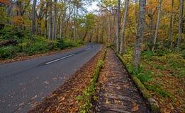 Поток Oirase в сезоне осени стоковое фото rf