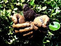 потребность s руки вы Стоковые Изображения RF