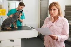 Потревоженная женщина смотря Билл в ветеринарной хирургии Стоковая Фотография RF