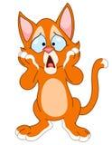 потревоженный кот Стоковое Фото