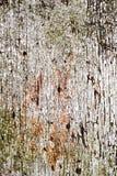 Потрескиванный, слезающ краску Стоковая Фотография
