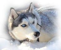 Похороненный в снеге стоковое изображение rf