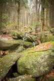 Поход в древесинах Стоковое Фото