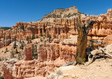 Поход каньона Bryce Стоковое Фото