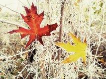 Поцелуй зимы в осени Стоковое Изображение RF