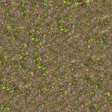 Почва весны с молодыми всходами заводов Стоковая Фотография